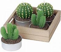 Cuidados del cactus: toda la información que buscas