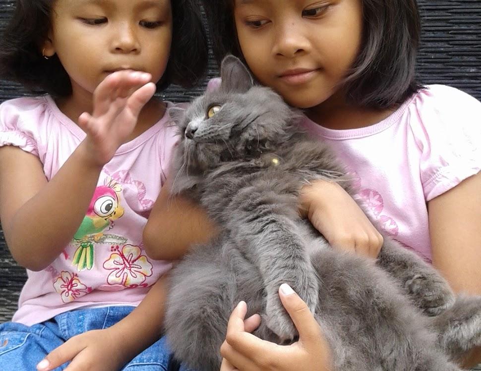 Memelihara Kucing Kesayangan Dengan Aman dan Sehat