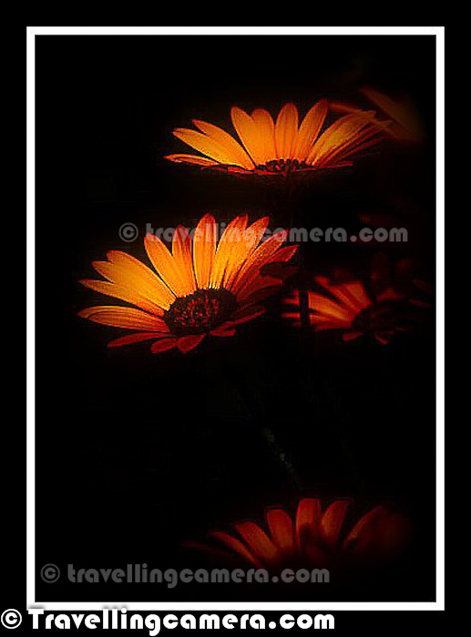Today is day of Flowers with Black/Dark Backgrounds. The day started with a Facebook chat with one of my friends. He wanted to know the secrets of such shots where we see Flower with Black/Dark Photographs. Of-course, on Photo Journey we are not going to share various techniques to achieve it. This Photo Journey is more about sharing some of the photographs we have shared in different stories and have colorful flowers with Black/Dark background.In the bottom there is a link to know techniques to achieve such photographs, which are quite simpleThe First photographic result is mix of some shooting techniques and Post-Processing in Adobe Photoshop Lightroom.  But the photograph just above is not processed at all. This one was shot during one of my trips to Jim Corbett National Park and these flowers were there in the resort, where we were staying. If you see carefully, above photograph is showing back side of the photograph and direction of shooting this flower was one of the main requirement to get black background. If the question about 'HOW' is bothering you too much, then check out - http://bit.ly/GW3ywW and come back here :Above Photograph was shot during Noida Flower Show in 2010 and the original photograph was not properly shot. So above photograph has lot of Photoshop work and it's basically over-processed.Blacks are something which makes any photograph more appealing. Many times people ask - 'Last night I clicked some photographs at my daughter's birthday. What should I do in Photograph to make them better'. The very simple answer from my side is Levels and Blacks. Because, the way people think about Photoshop is not right. There is lot of subjectivity involved when we talk about Post-Processing a photograph in Photoshop. How such questions can have simple answer.If you are also interested in trying such photographs, just check out - http://bit.ly/GW3ywW. This article talks about each photograph you are seeing in this Photo Journey and talking about the basic 