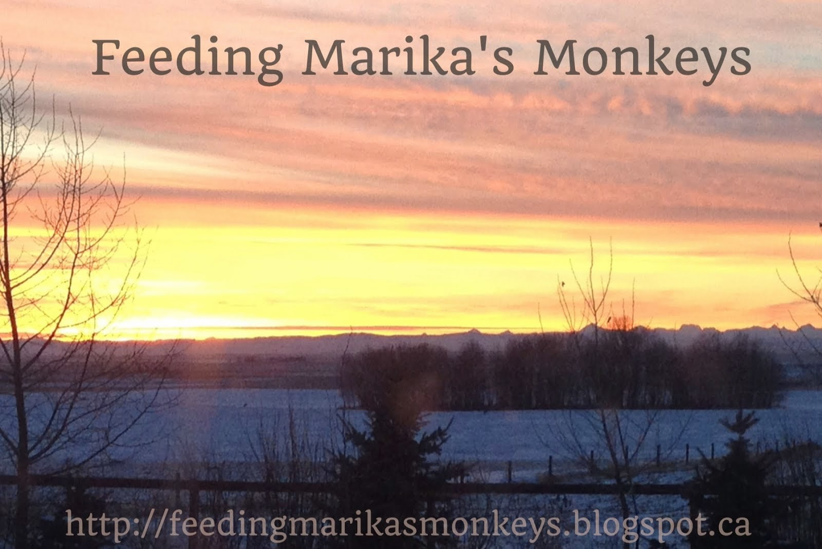 Feeding Marika's monkeys