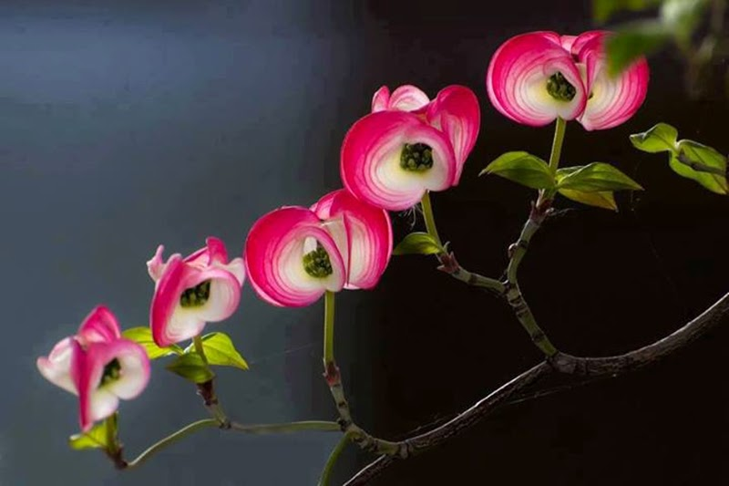 Top Five Beautiful Pink Rose Flowers Image Wallpapers Pictures Online Free Stock