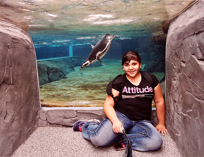 June Keyes Penguins Aquarium of The Pacific