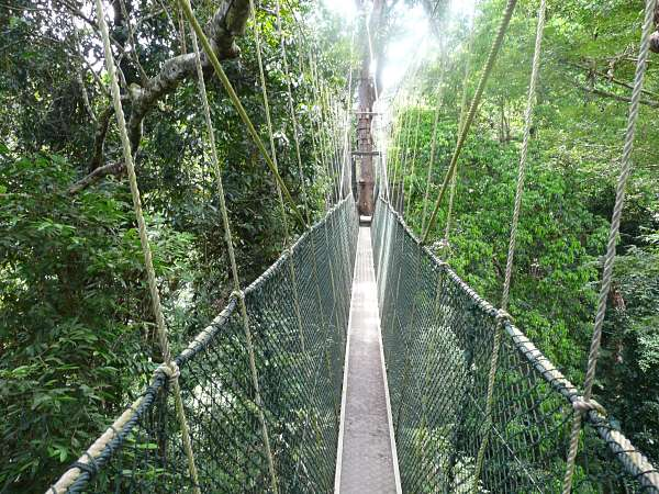Nationalpark Taman Negara Canopy Walk