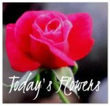 http://anenglishgirlrambles.blogspot.com/2015/12/todays-flowers-377-december-18th-2015.html