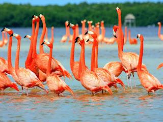 Grupo de flamencos