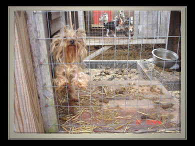 "MIDWEST PUPPY MILL RAID ~  ""ALMOST HEAVEN KENNEL"""
