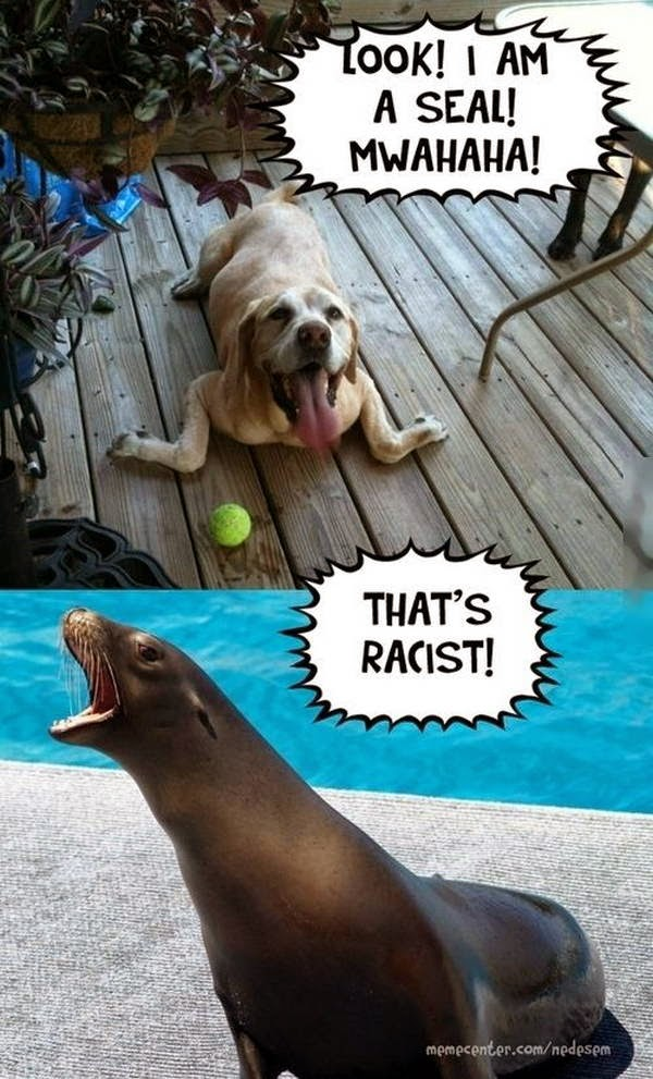 30 Funny animal captions - part 22 (30 pics), animal meme, funny captions, captioned pictures, funny animals