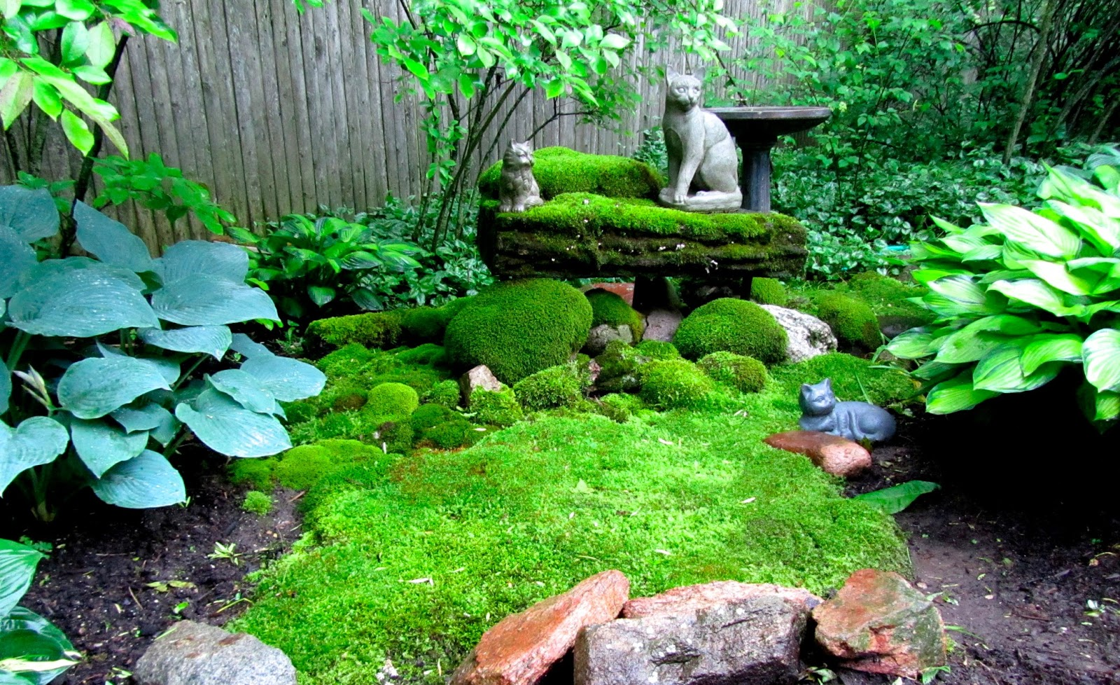 Image result for beautiful moss gardens