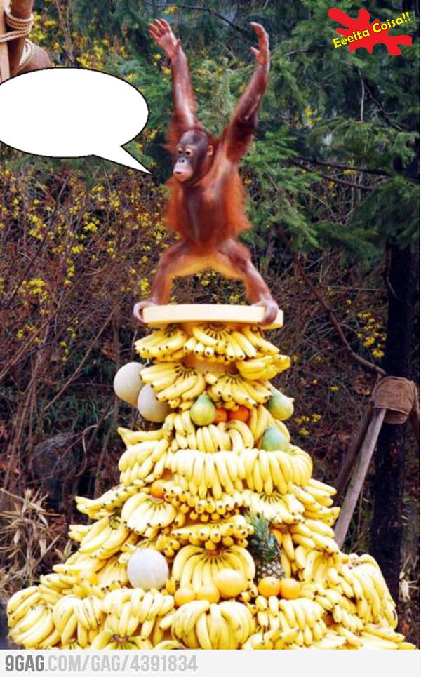 frase e sua, macaco, banana, eeeita coisa
