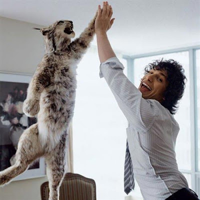 high five kitty cat