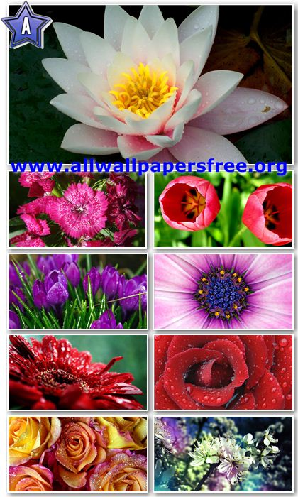 FLowers HD Wallpaper, Summer Flower HD Wallpaper [8, Pink Flower Beautiful HD