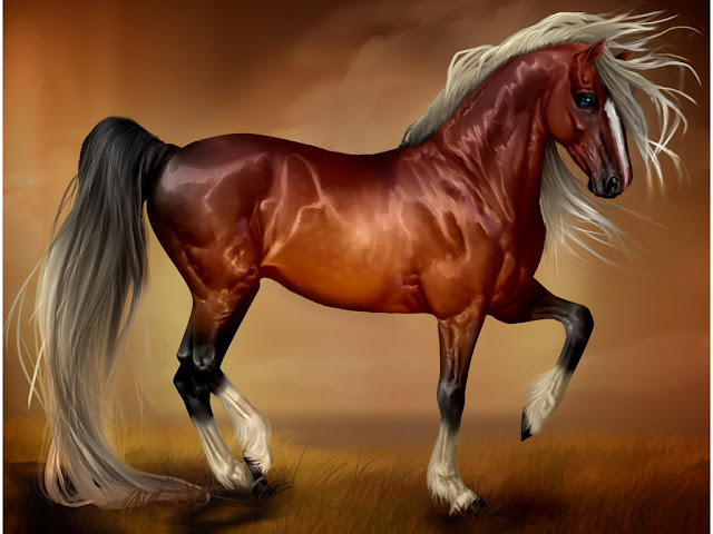 horse wallpaper awesome pair - photo #29