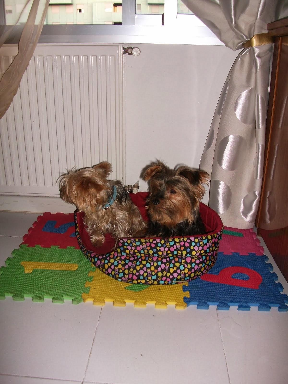 Cuido mascotas madrid
