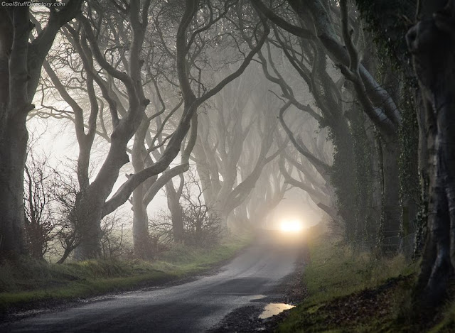 3. The Dark Hedges by Gary McParland