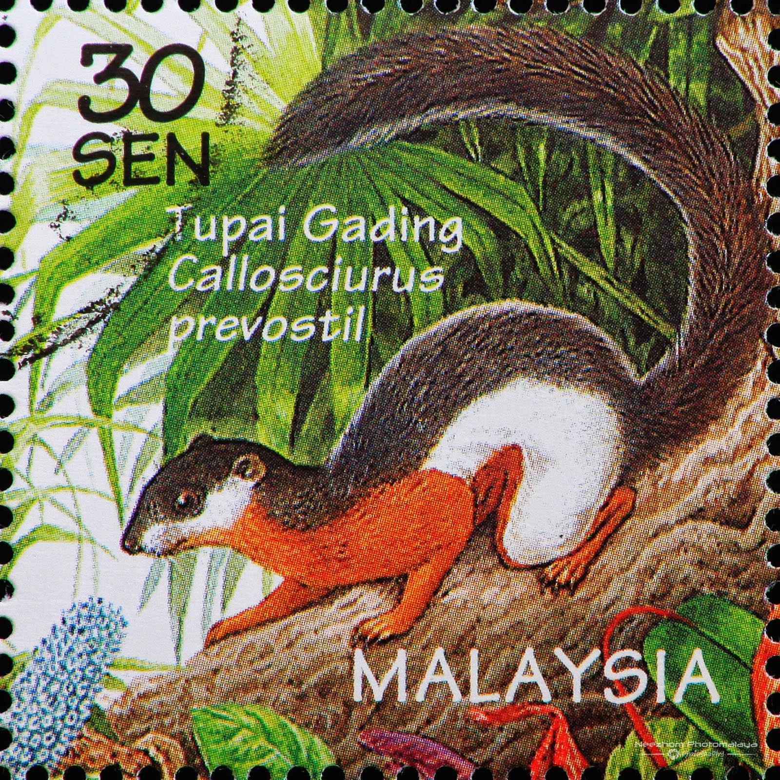 Malaysia 1996 Wildlife - Callosciurus / Tupai Gading (Callosciurus prevostil) 30 sen