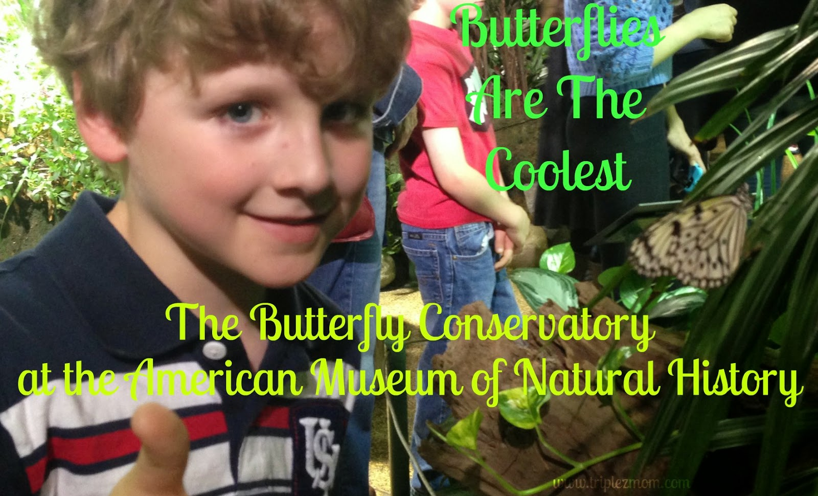 The Butterfly Conservatory.