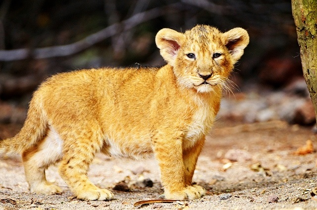 cute animal babies