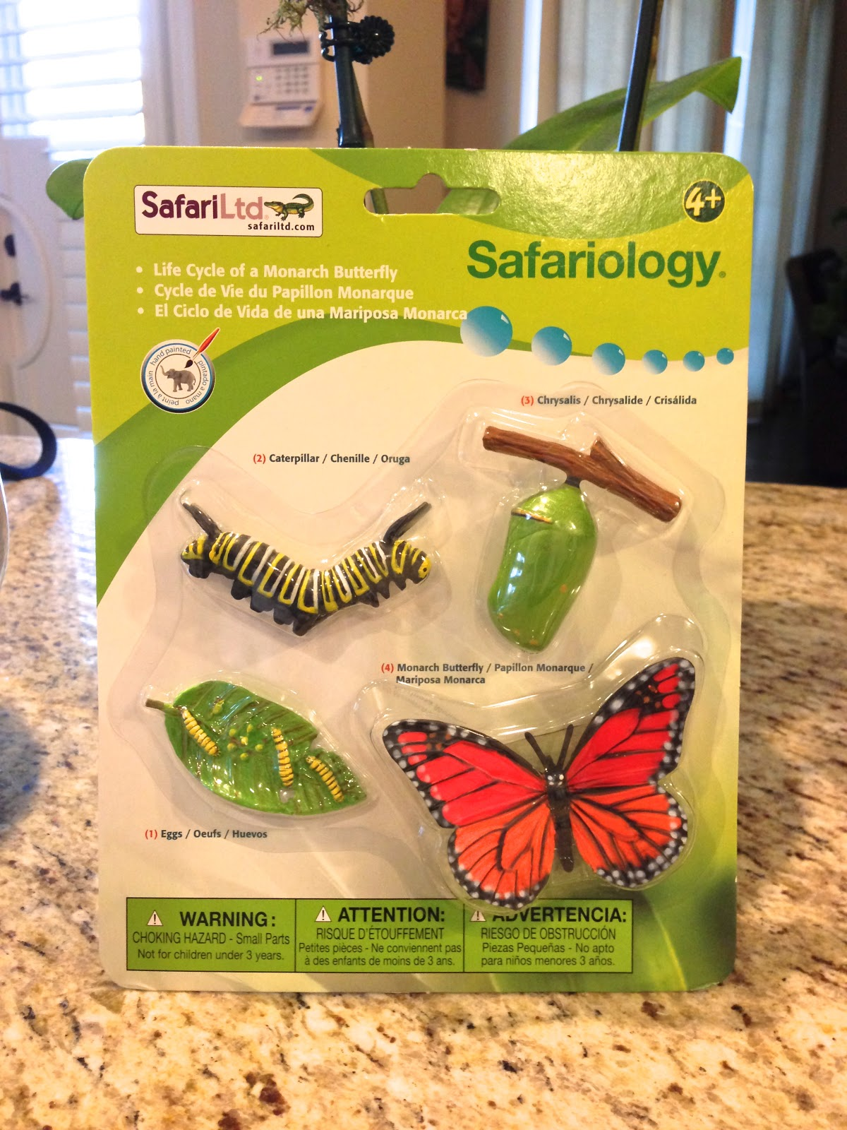 Life cycle of butterfly model - photo#3