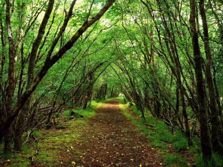 woods path trees