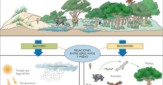 F sica y qu mica ecosistemas for Medio en el que habitan los arboles