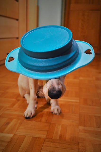Miska podróżna dla psa