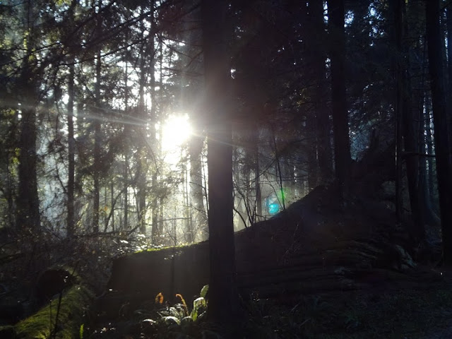 Sun coming through the trees in Stanley Park in Vancouver