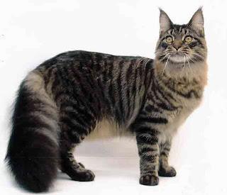nama ilmiah anjing,ilmiah gajah,kampung,persia,anggora,hutan,klasifikasi ilmiah kucing,ilmiah tumbuhan,