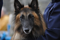 Tervlass And Friends Use Of Acupressure In Canine