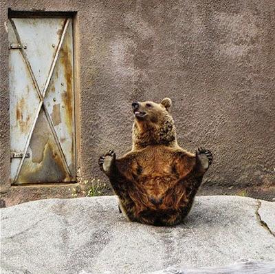 beruang santra2
