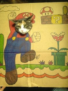 funny cat picture  i love mario bros