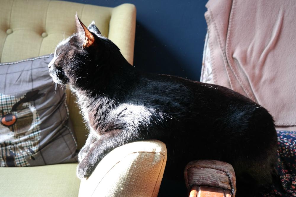 Gizmo sunbathing