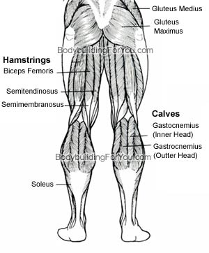 Stretches furthermore 47898 H additionally Gmc 15176084 Panel also Stretches additionally Legs Muscle Anatomy. on outer knee diagram