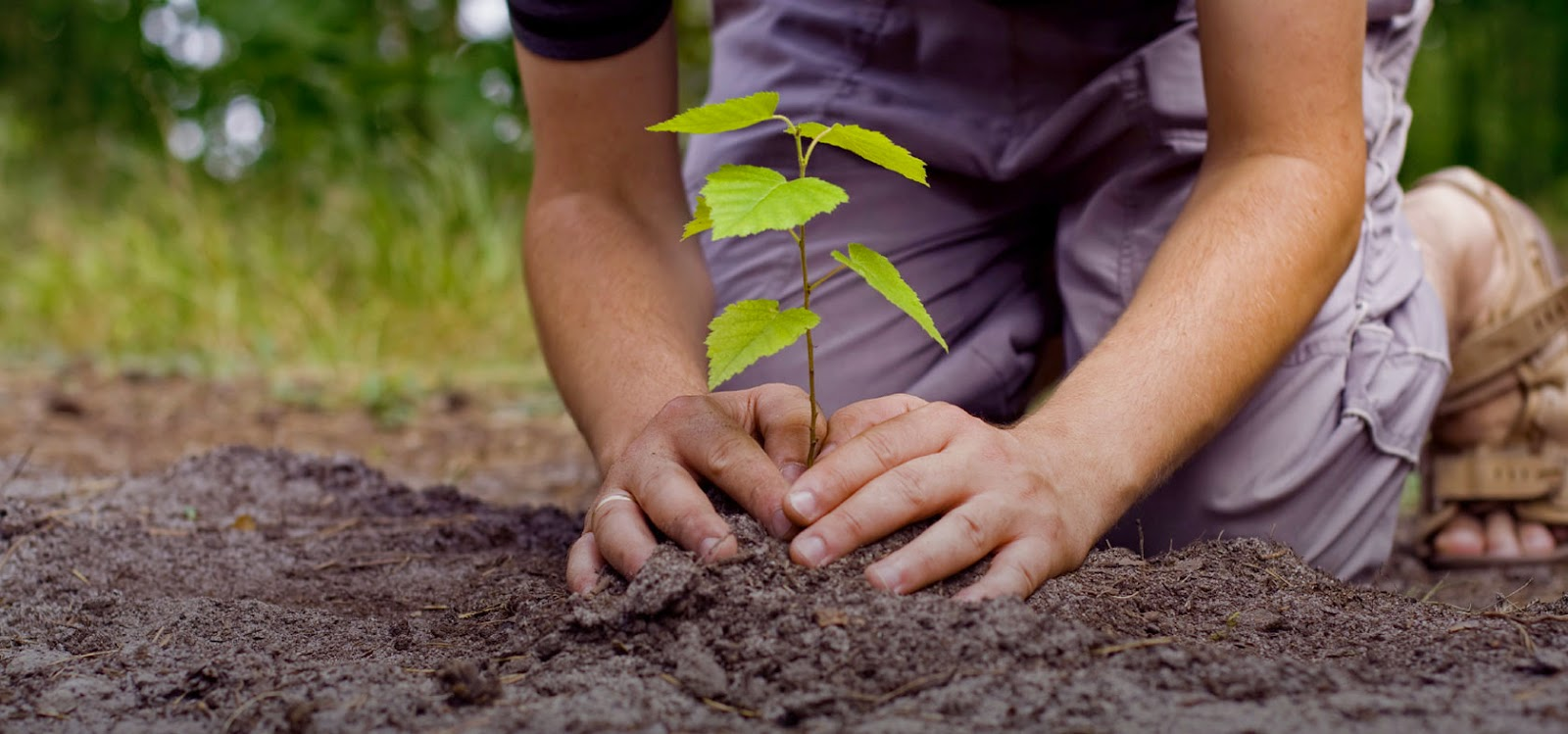 planting tree by hand
