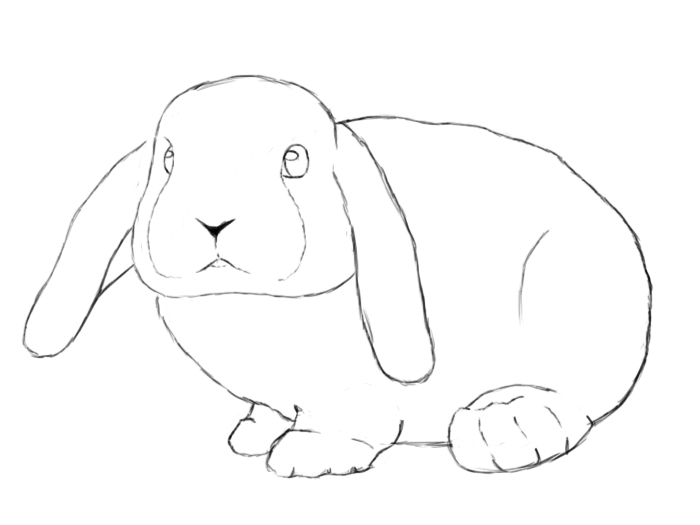 How To Draw A Bunny Step By Step Draw Central