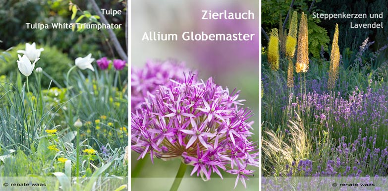 Blumenzwiebel für Blumenbeete