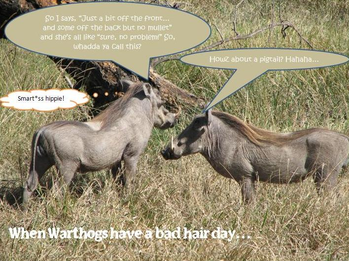Warthog-bad-hair-day