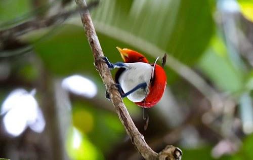 وتسلية طيور الخيال أكثر الطيور إثارة