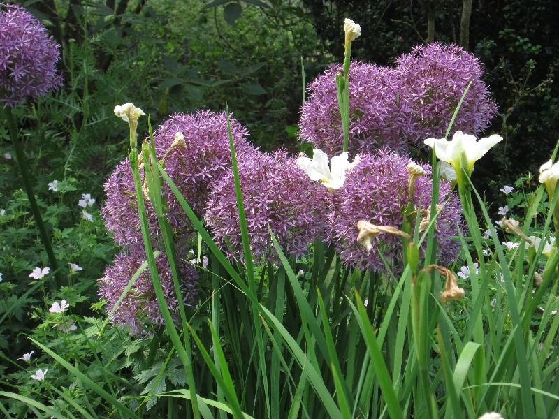 El cuexcomate 18 plantas ornamentales for 20 plantas ornamentales