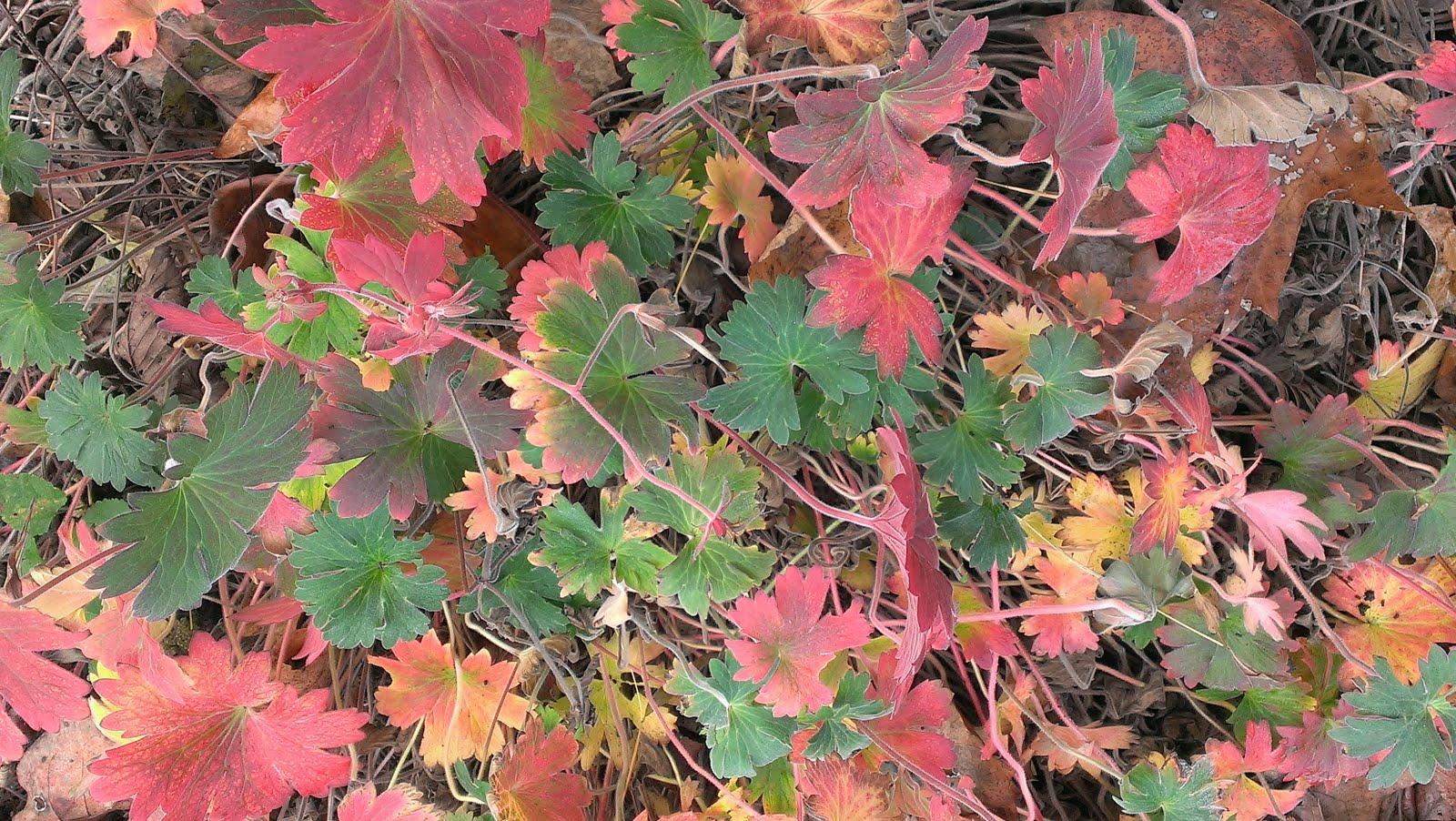 fall-iage