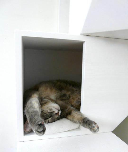 Rumah Kucing 5
