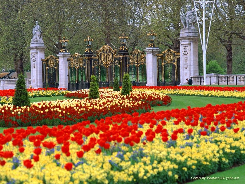 Flowers sceneries flower wallpaper flowers sceneries izmirmasajfo