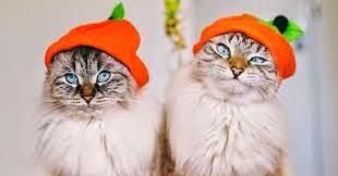 Funny halloween animals2-3