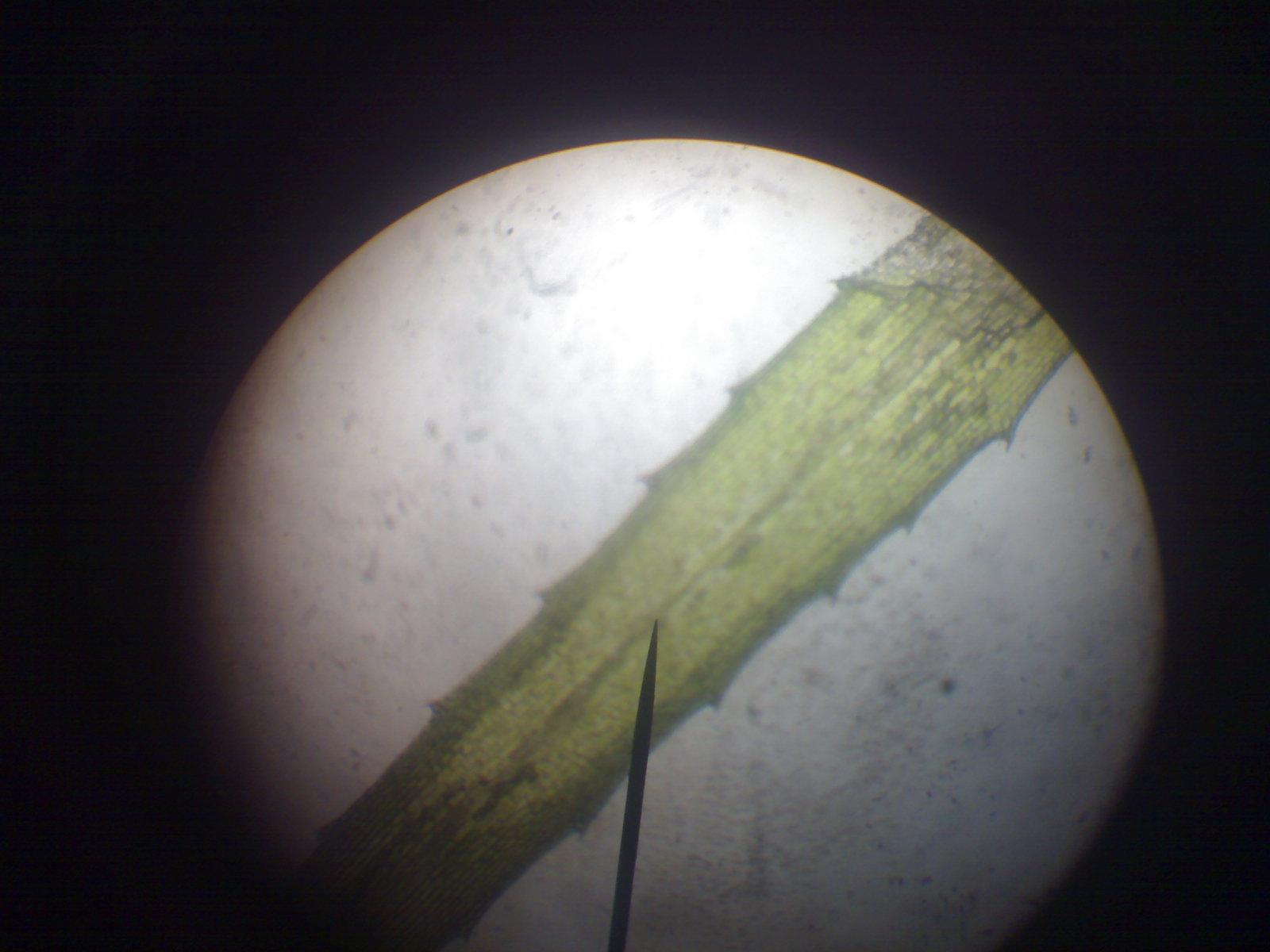 Buku biologi universitas tentang mikroskop laporan praktikum