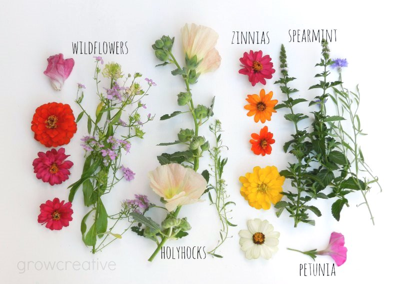wildflowers and herb photography: grow creative