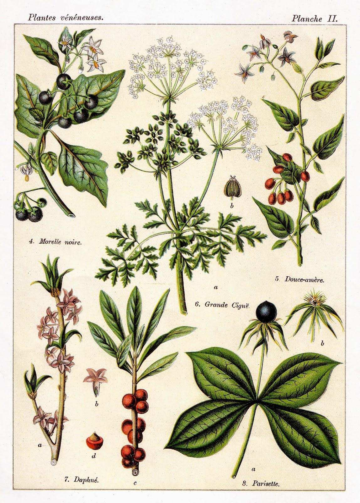 """Résultat de recherche d'images pour """"célèbre dessinateur planches botaniques"""""""