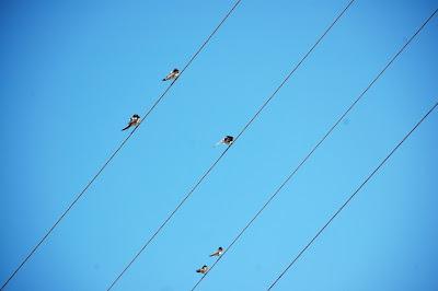 linie energetyczne Łyna