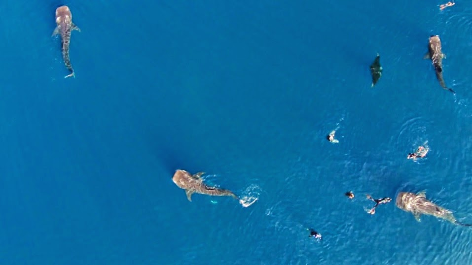 People swimming with sharks unknowingly