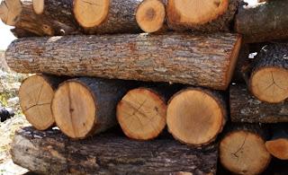 """Откраднаха дърва, собственост на горско стопанство """"Сеслав"""