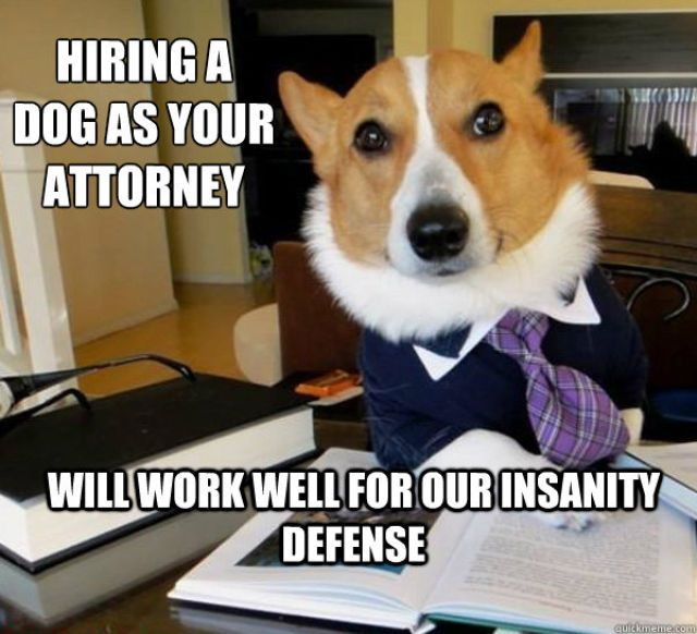 lawyer dog meme, meme, funny, funny pictures, dog meme pictures, corgi lawyer dog, corgi meme, dog pictures, funny dog pictures