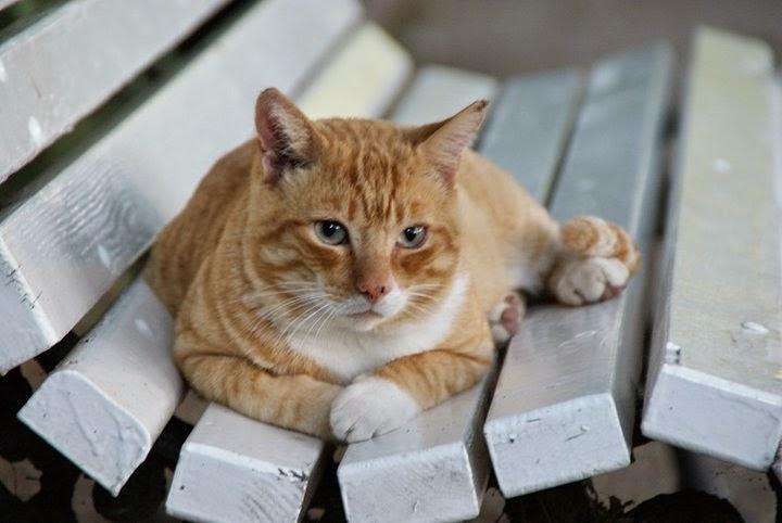 Callejeando por valencia gatos del jard n bot nico de for Ahuyentar gatos jardin